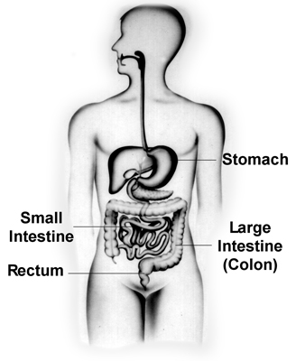 intro to ibs
